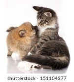 Cat And Dog  Spitz Puppy And...