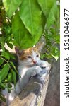 Stock photo cute baby kitten sitting in a tree pot cute kitten brown white hairs color indonesian domestic 1511046677