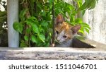 Stock photo cute baby kitten sitting in a tree pot cute kitten brown white hairs color indonesian domestic 1511046701