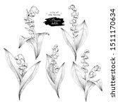sketch floral botany collection.... | Shutterstock .eps vector #1511170634