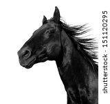 Beautiful Black Stallion...