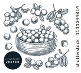 cranberry berries sketch vector ... | Shutterstock .eps vector #1511344814