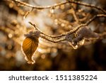Leaves And Branches In Cold...
