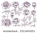 peonies doodle. leaves and buds ...   Shutterstock .eps vector #1511441021