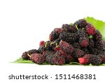 fresh mulberry fruit on white... | Shutterstock . vector #1511468381