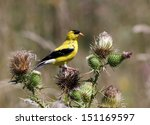 a male colorful american...   Shutterstock . vector #151169597