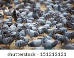 Fed Pigeons At The City Square...