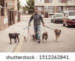 Stock photo professional dog walker or pet sitter walking a pack of cute different breed and rescue dogs on 1512262841