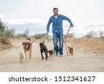 Stock photo professional dog walker or pet sitter walking a pack of cute different breed and rescue dogs on 1512341627