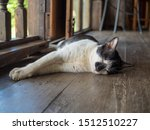 Stock photo the cute little black and white cat sleeping on on the wooden floor with blur background 1512510227