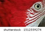 The Eyes Of Macaws  Red And...