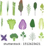 salad greens and leaves set ... | Shutterstock .eps vector #1512623621