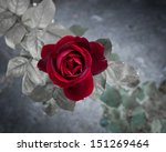 Stock photo red rose in the wild 151269464