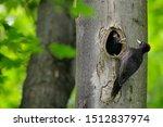 Bird Nesting Behaviour....