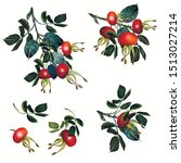 collection of vector rose hip ... | Shutterstock .eps vector #1513027214