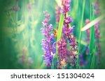 Meadow Flower   Purple Flower