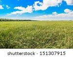 A Field Of Grass During A Sunn...