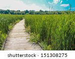 wooden walk way in middle of a... | Shutterstock . vector #151308275