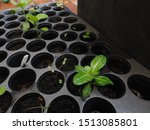 Small photo of Small plant in the seedling tray. Sprout ready to grow up.