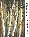 Watercolor Painting Of Birch...