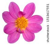 studio shot of fuchsia colored... | Shutterstock . vector #1513617551