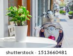 Stock photo green plant growing in white pot on white round table cafe table outdoor in sunny autumn day 1513660481