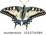 Swallowtail Butterfly On White...