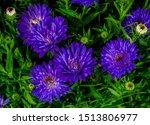 Surrealistic Violet Blue Autum...
