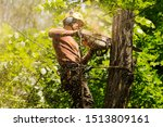 An Arborist Cutting A Tree With ...