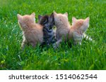 Stock photo small red kittens in green grass 1514062544