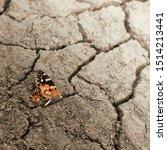 Dead Butterfly On Dried Cracke...