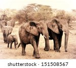vintage photograph from a herd... | Shutterstock . vector #151508567