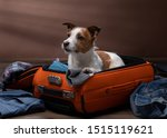 Dog Travel. Jack Russell...