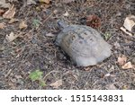 Stock photo very cute tortoise is walking on the road 1515143831