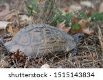 Stock photo very cute tortoise is walking on the road 1515143834