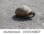 Stock photo very cute tortoise is walking on the road 1515143837