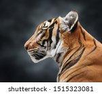 Portrait Of Magnificent Tiger...