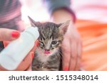 Stock photo little gray kitten drinks milk from a bottle feeding kittens without a nursing cat kittens on 1515348014