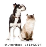 Stock photo dog and cat looking up focused on the cat isolated on white background 151542794
