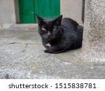 Stray Black Cat With Green Eyes ...