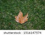 Stock photo falling leave on the grass 1516147574