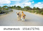 Small photo of Two small cute stray dogs pet lonely on the road looking at camera and chasing you. Lost stray pets without owner. Friendly dog lonely strayed in street, Cute doggy homeless Murcia, Spain, 2019