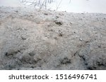 Chunks Of Dirty Snow With Some...