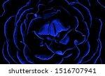 Closeup Of A Black And Blue...
