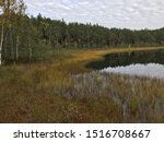 bog landscape with small lake and bog pines