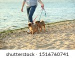 Stock photo young woman walking her adorable brussels griffon dogs near river 1516760741