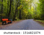 autumn landscape, wooden bench and road with a bend in the city Park