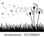The Vector Dandelion On White...