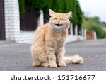 Ginger Cat Laughs