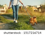 Stock photo young woman walking her adorable brussels griffon dogs outdoors 1517216714